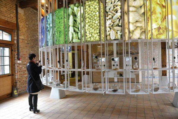 Rechthoekige lichtbak van granen en gras in het jenevermuseum.